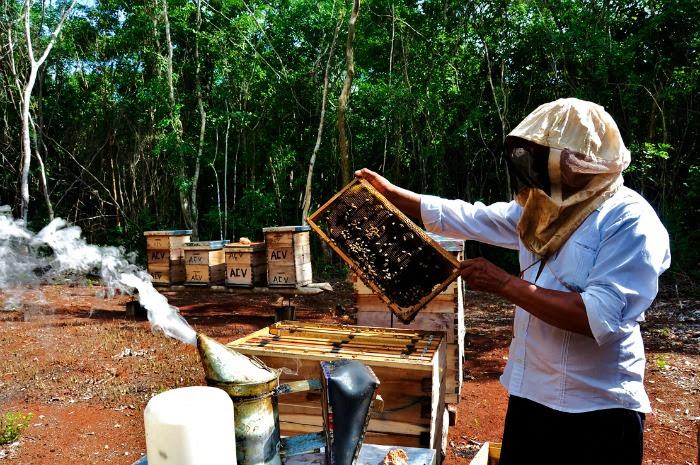 monsanto-apicultores-Yuc